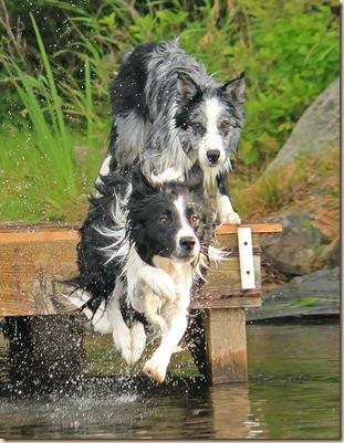 Dogs_Lake_070312e (6)