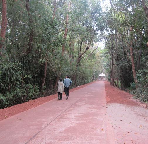 เส้นทางในวัดป่า