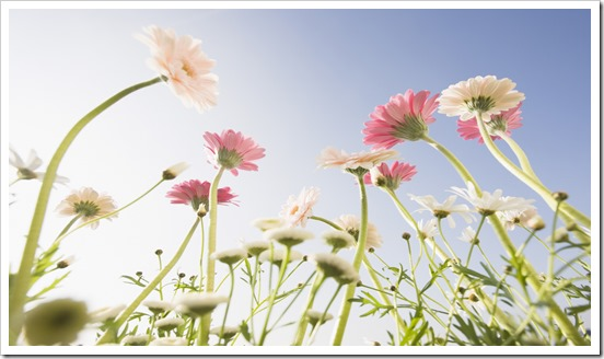 [wallcoo]_Blue_Sky_and_Flowers_HM089_350A