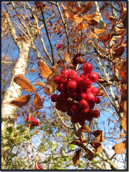 Berries nearCorriechoille
