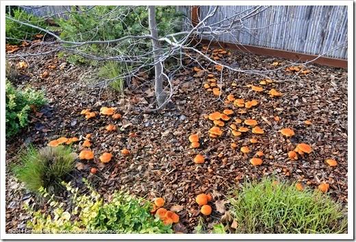 141216_mushrooms_005