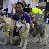 Pet Express Doggie Run 2012 Philippines. Jpg (243).JPG