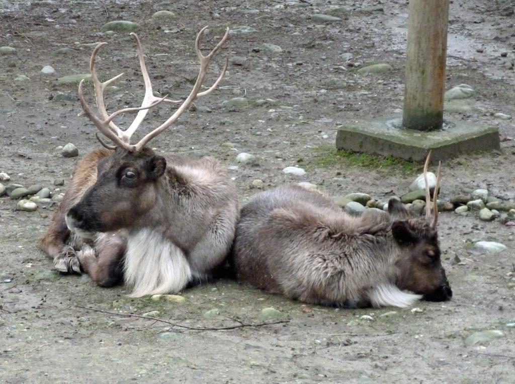 [Reindeer%2520Festival%25203%255B4%255D.jpg]