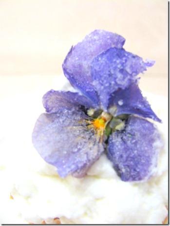 viola with sugar