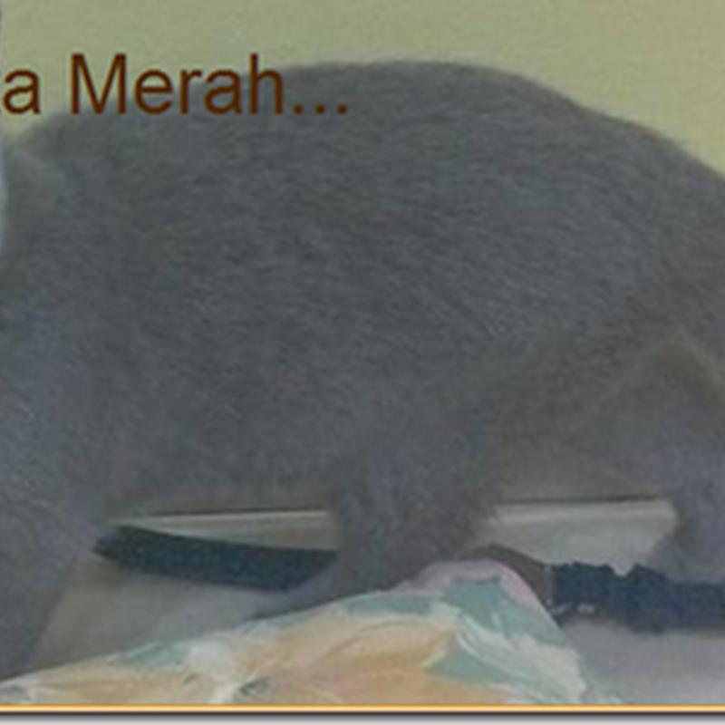 Blog Pilihan BEN ASHAARI #1/2013