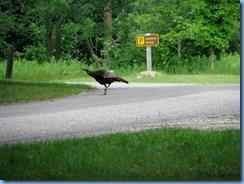 5115 Laurel Creek Conservation Area  - wild turkey