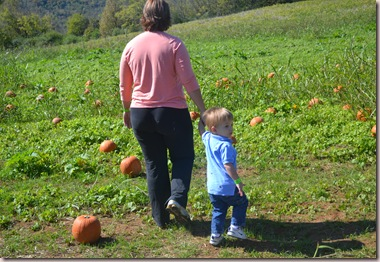 Pumpkin 056