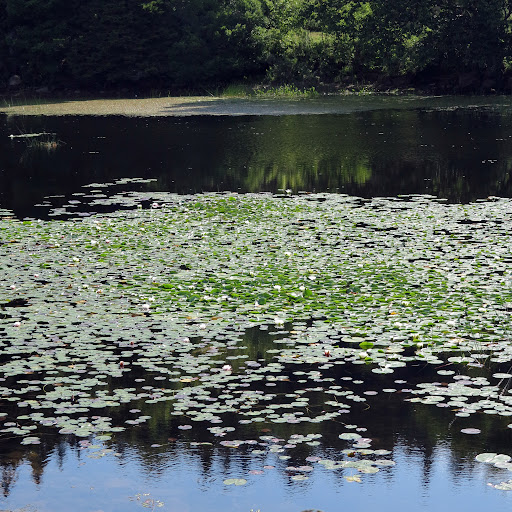Just staring at the pond filled with water lilies is quite inspiring.  No wonder Claude Monet produced a series of 250 gorgeous water lily paintings!