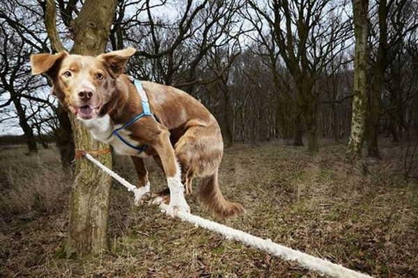 4- Mais rápido cão na corda bamba