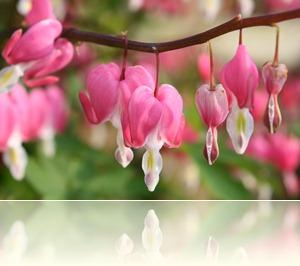 bloemen in de tuin 004