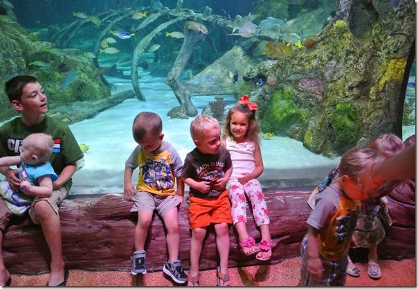 Sea Life Aquarium 200