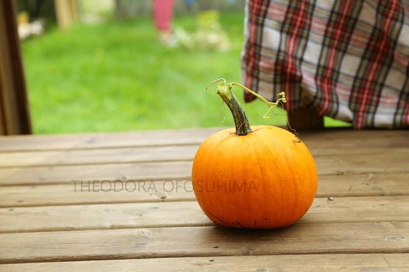 toi pumpkin