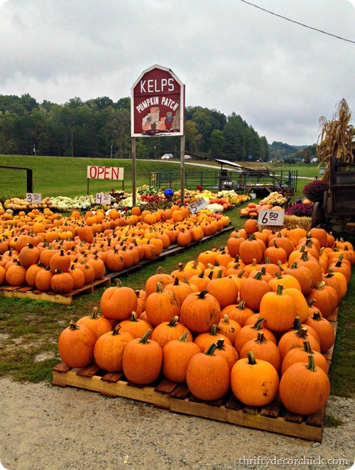 nashville pumpkin patch