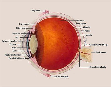 Penemuan lapisan baru kornea mata manusia