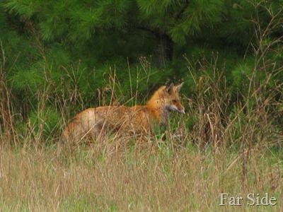 Fox May 6