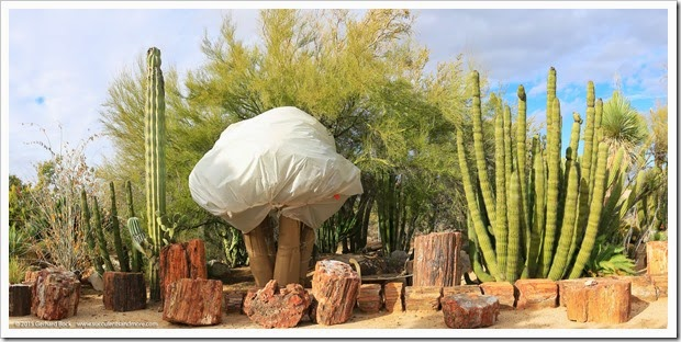 141231_Tucson_Bachs_pano1