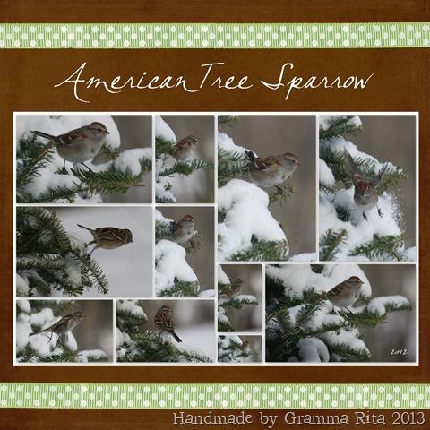 2-12 American Tree Sparrow  2012