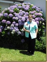 Janice K Hydrangea