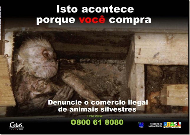 maus_tratos2 (1)