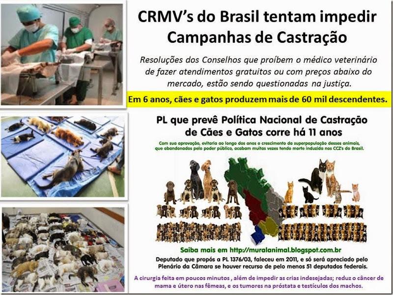 CRMV's do Brasil tentam impedir Campanhas de Castração