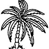 palmera1.jpg