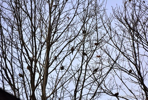 12. 12-21-14 doves-kab