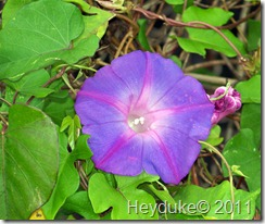 2011-12-15 Everglades Fl 023