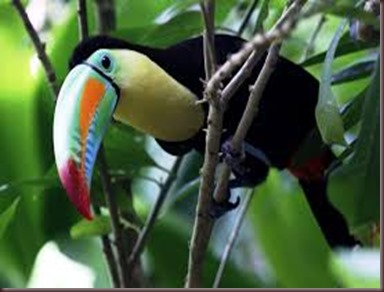 Amazing Pictures of Animals photo Nature exotic funny incredibel Zoo, Ramphastidae, Toucan, Bird, Alex (20)