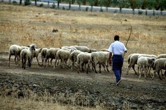 Ξεσηκώνονται οι κτηνοτρόφοι σε όλη την Ελλάδα