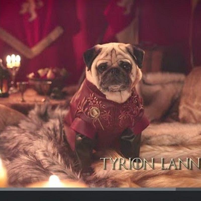 Οι Pugs του Westeros