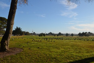 big fast ducks on the golf course at the Naval Military Family Camp Monterey Pines