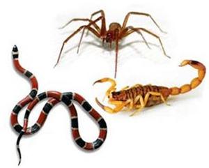 Quem e mais venenoso_ o escorpiao, a aranha ou a cobra[14]