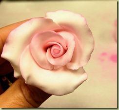 pinkroses14