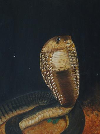 tracey snyman egyptian cobra