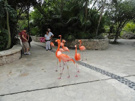 Flamingo Xcaret Mexic