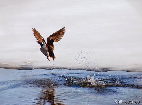 6. flyaway-kab