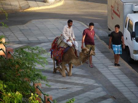 Obiective turistice Iordania: Camila pe strazile din Aqaba