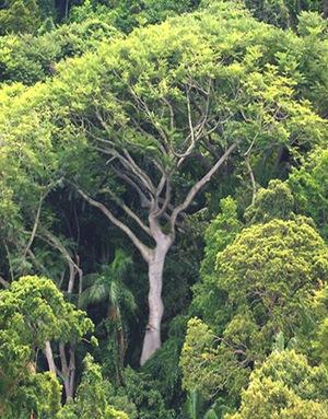 Grande vecchio albero e alberi giovani