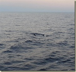 20121227_Dolphins-1 (Small)