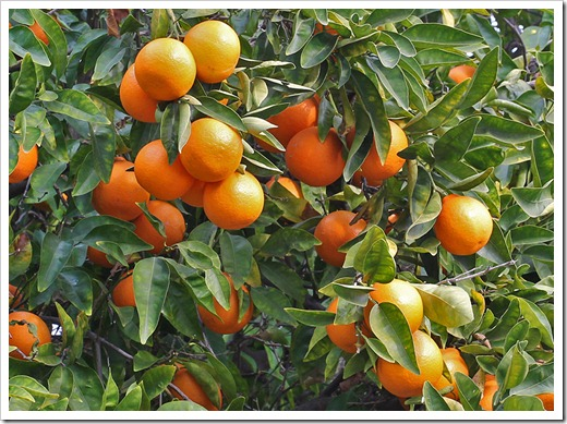 120103_orange_41