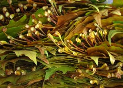 Plantanenblätter