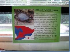 7192 Restoule Provincial Park - Visitor Centre - painted turtle info