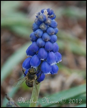 blue and bee 2012
