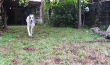 FINAL DEL VERANO 2011 ALDEA RAMIRO 004