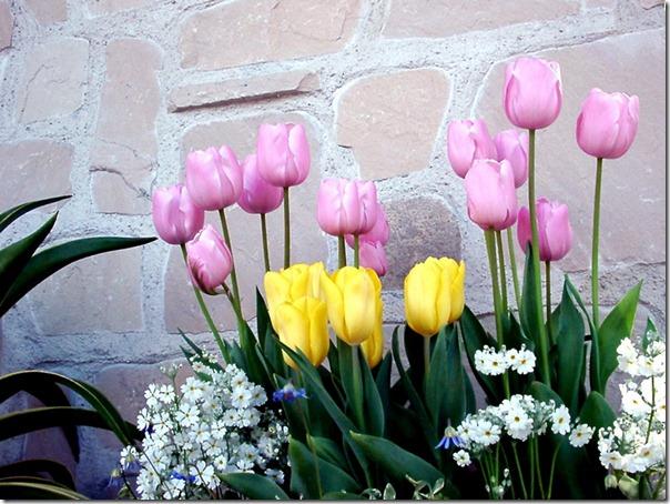 flor día del amor (45)