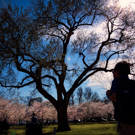 Silhouette of a tree by Walt Mlynko - Nature Up Close Gardens & Produce ( generic event, event, dc trip )