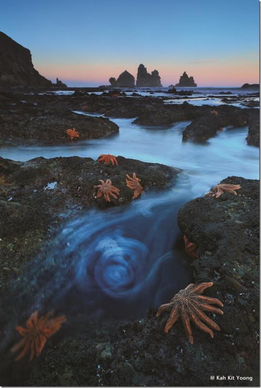 Starfish Swirl