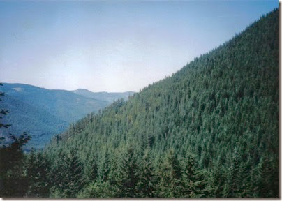 View of Martin Creek from the Iron Goat Trail in 1998