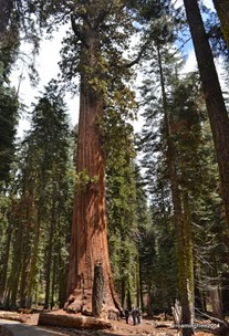 Giant trees . . . tiny people