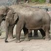 zoo_kolmarden_8925.jpg
